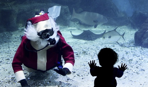 Christmas celebrations at the Melbourne Aquarium