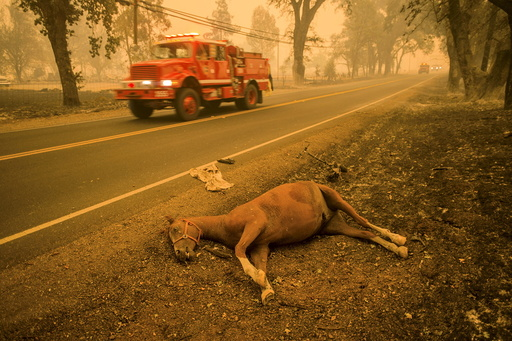 A dead horse lies beside Highway 175 after the Valley Fire raged through Middletown