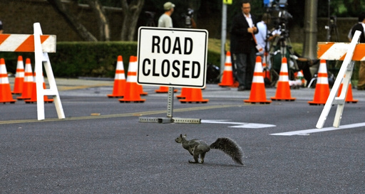 A squirrel passes a road block nearby Forest Lawn Memorial Park in Glendale