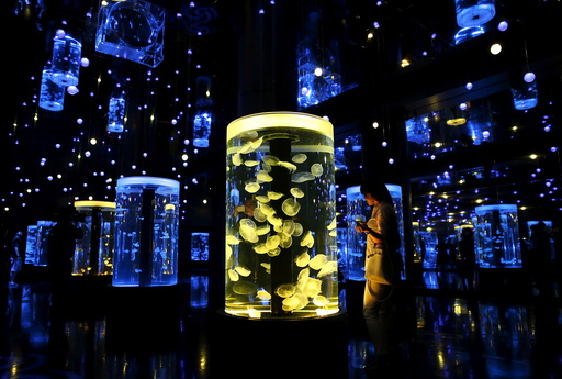 A woman looks at jellyfish during a media preview for the Epson Aqua Park Shinagawa aquarium's re-opening in Tokyo