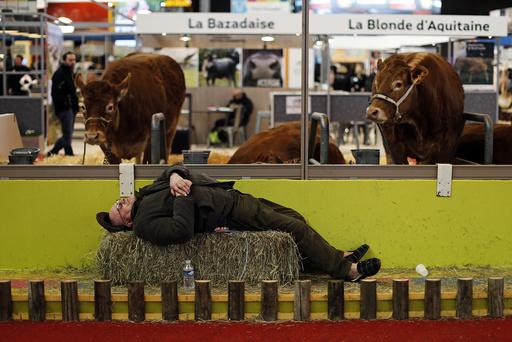 A farmer sleeps near cows at the International Agricultural Show in Paris