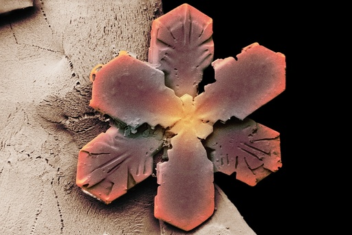 Snowflake, low-temperature SEM