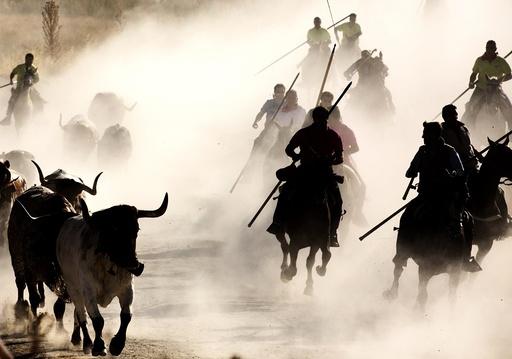 First bull run with horses in Cuellar