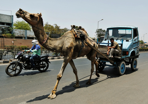 A man pulls the front body of a mini-truck on a camel cart in Ahmedabad