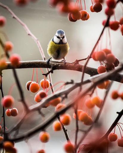 Between ornamental apples