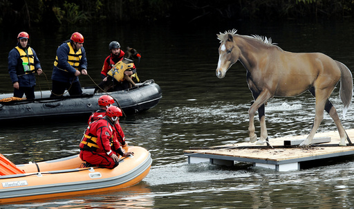 Rescue workers evacuate mock animals as part of an international field exercise in Podgorica