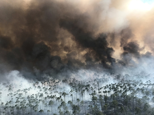 The West Mims fire burns in the Okefenokee National Wildlife Refuge
