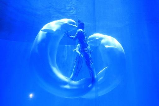 Beluga whales kiss their trainers during a performance at a aquarium in Harbin