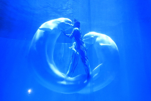 Beluga whales kiss their trainers during a performance at a aquarium in Harbin
