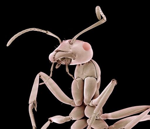 Ant, SEM