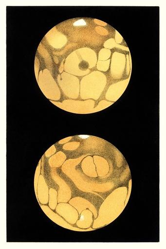Schiaparelli's Mars, historical artwork