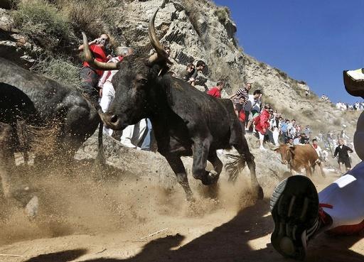 Pilon bull run 2016