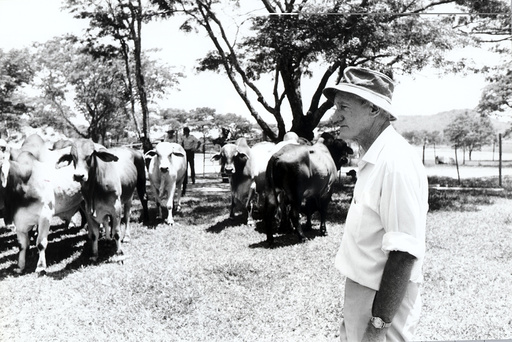 Ian Smith Former Rhodesia Prime Minister On His Farm Gwendoro 350 K From Harare Zimbabwe. His Brahmin Cattle Graze In The Background.