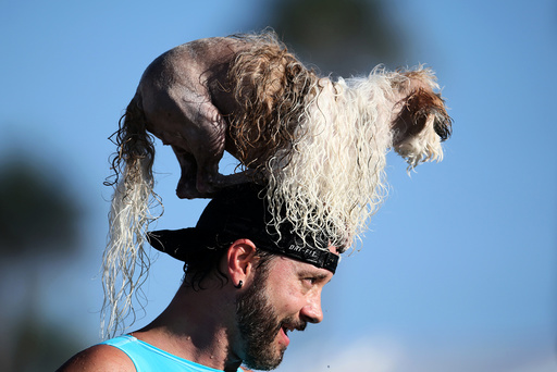 A man carries a dog on his head during the Surf City Surf Dog competition in Huntington Beach