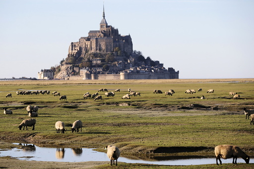 Sheep graze in a marsh field in Le Mont-Saint-Michel, France
