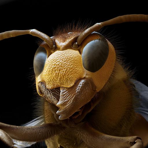 Hornet head, SEM