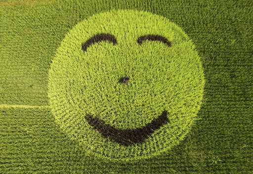 A picture of smiling face made of rice plants is seen at a paddy field in Xianju county