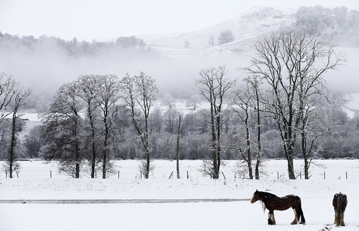 Horses stand in a snow covered field in Perthshire, Scotland