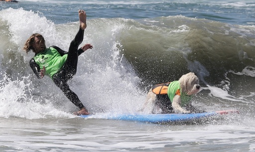 Dog surf competition in Huntington Beach