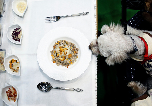 A pet dog sniffs an organic dog food during Interpets in Tokyo