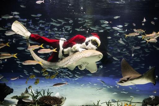 Underwater feeding performance at aquarium in Tokyo