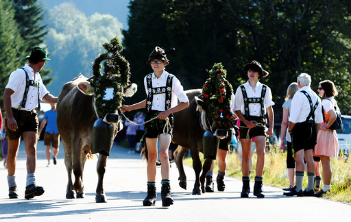 Bavarian farmers escort cows during traditional