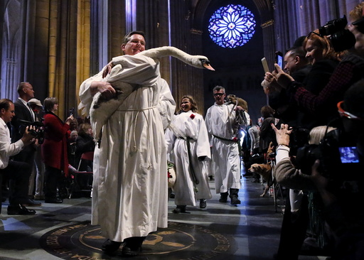 A swan is carried down the nave of the cathedral during the Procession of the Animals at the 31st annual Feast of Saint Francis and Blessing of the Animals at The Cathedral of St. John the Divine in the Manhattan borough of New York