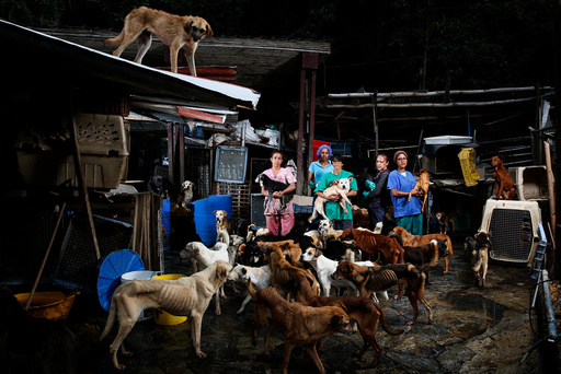 The Wider Image: It's a dog's life