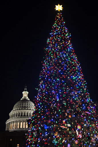 The Capitol Christmas tree, after the annual lighting ceremony on the West lawn of the Capitol in Washington.