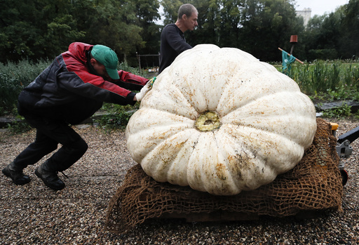 Men transport a giant pumpkin before its presentation in Moscow