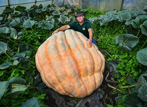 Giant vegetables
