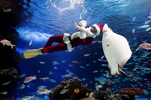 A diver wearing a Santa Claus costume swims in a large fish tank during an underwater performance at Sunshine Aquarium in Tokyo