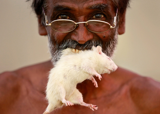 A farmer from the southern state of Tamil Nadu poses as he bites a rat during a protest demanding a drought-relief package from the federal government, in New Delhi