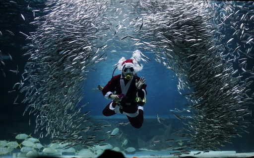 A diver dressed in a Santa Claus costume swims with sardines during a promotional event for Christmas at the Coex Aquarium in Seoul
