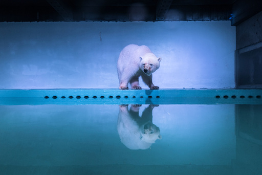 A polar bear is seen in an aquarium at the Grandview mall in Guangzhou, Guangdong province, China