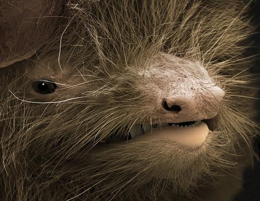 Face of a pipistrelle bat