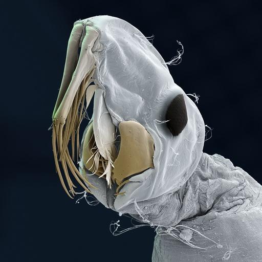 Phantom midge larva, SEM