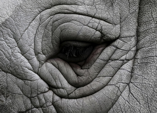 The eye of a rhinoceros is seen at a private zoo called