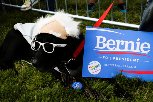 Frisco, a black labrador, shows off his support for Democratic U.S. presidential candidate Bernie Sanders at a campaign rally in San Francisco