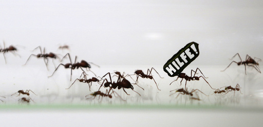 Ants carry a leaf with a slogan reading