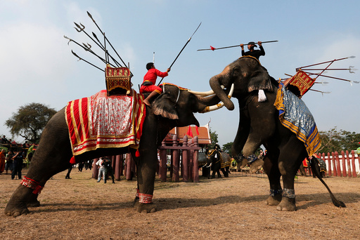 Thai mahouts take part in an elephant fighting demonstration during Thailand's national elephant day celebration in the ancient city of Ayutthaya