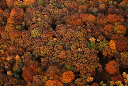 An aerial view shows a deciduous forest on a sunny autumn day in Recklinghausen