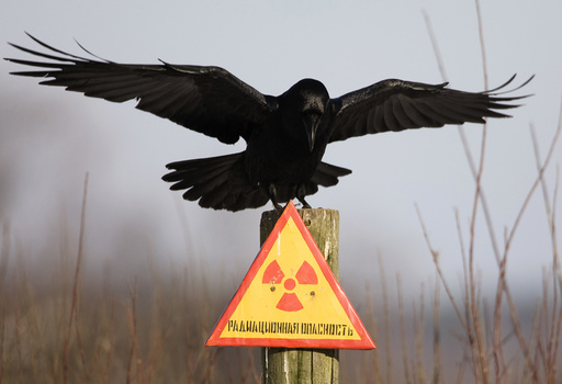 A raven stretches its wings as it sits on a post inside the exclusion zone around the Chernobyl nuclear reactor near the village of Babchin