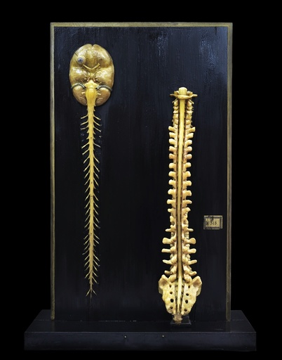 Brain and spinal cord model, 18th century
