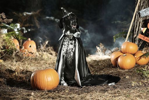 How not to let your pet get spooked this Halloween!