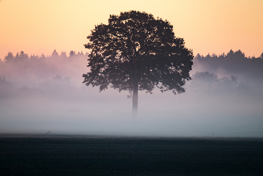Morning fog in southern Germany