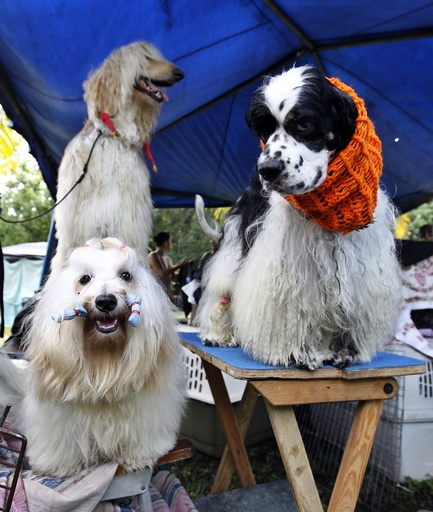 International Fall Championship for purebred dogs in Havana
