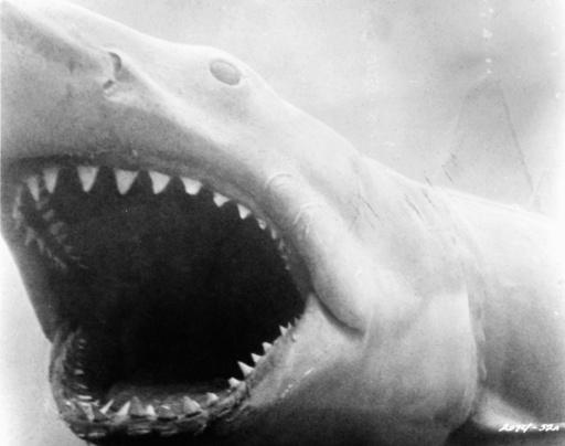 'Der weiße Hai' / Szene - 'Jaws' / Scene -