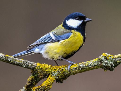 Hour of winter birds - observe and report birds