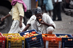 En arbeider spiser en tomat på et av Asias største matmarkeder, Azadpur mandi i New Delhi, India. Foto: Mustafa Quraishi / AP / NTB